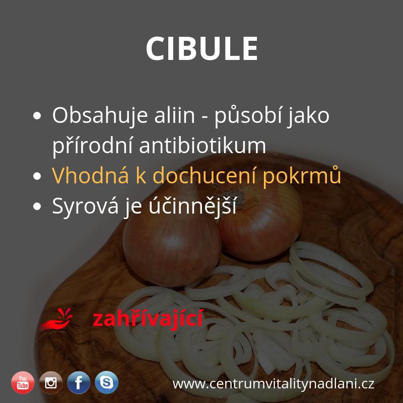 Cibule.png