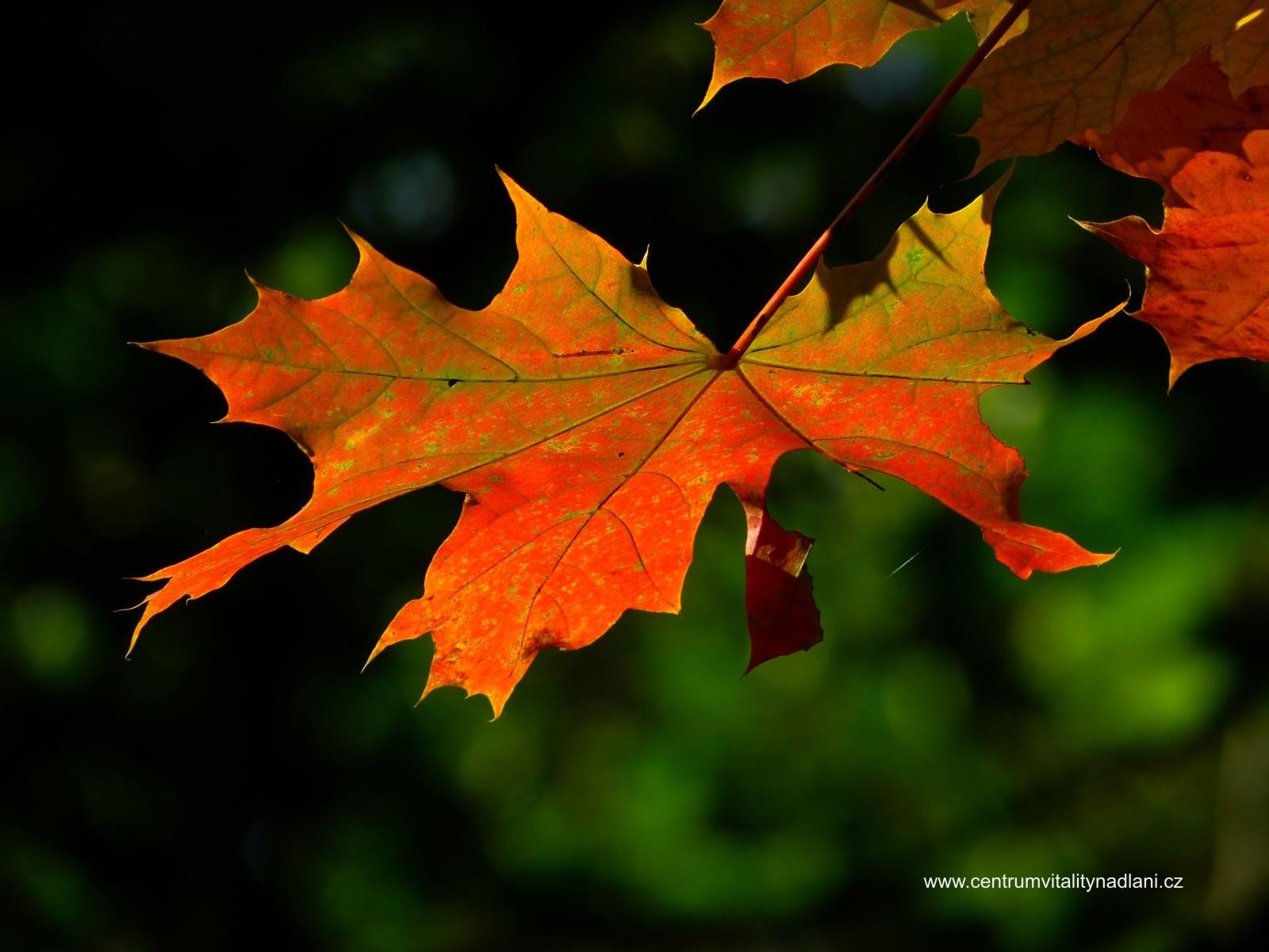 Podzim_03.jpg