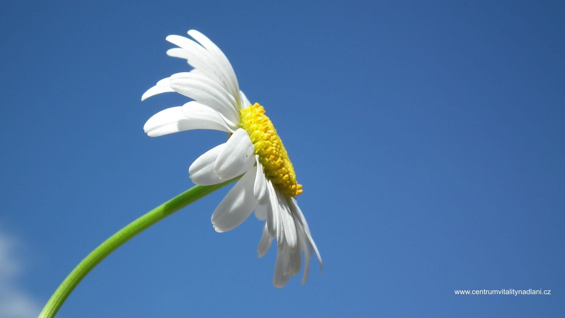 Kvetina_01.jpg