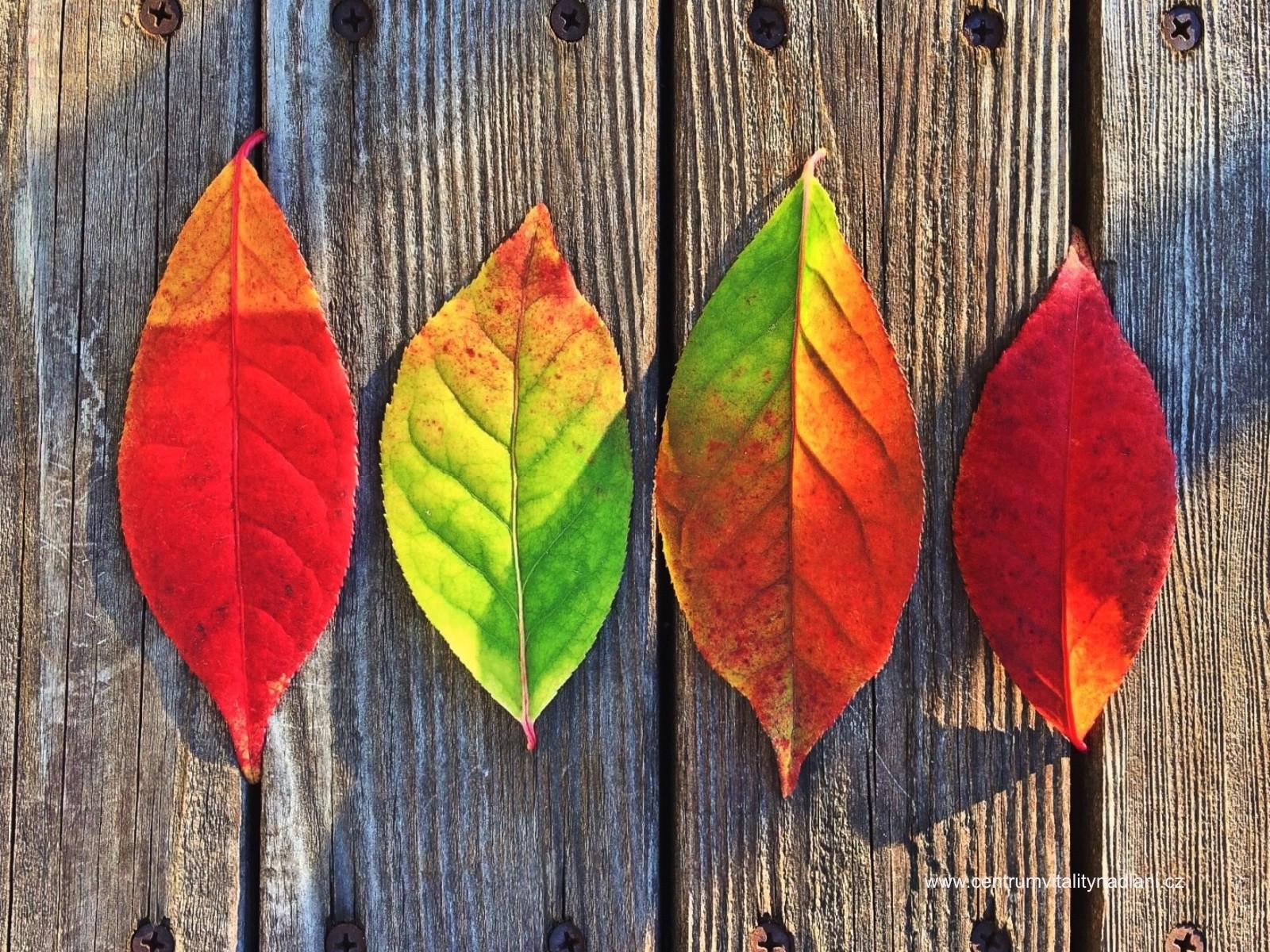 Podzim_01.jpg