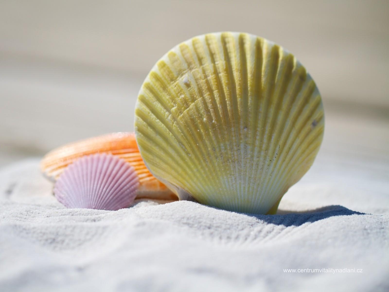 Shell.jpg