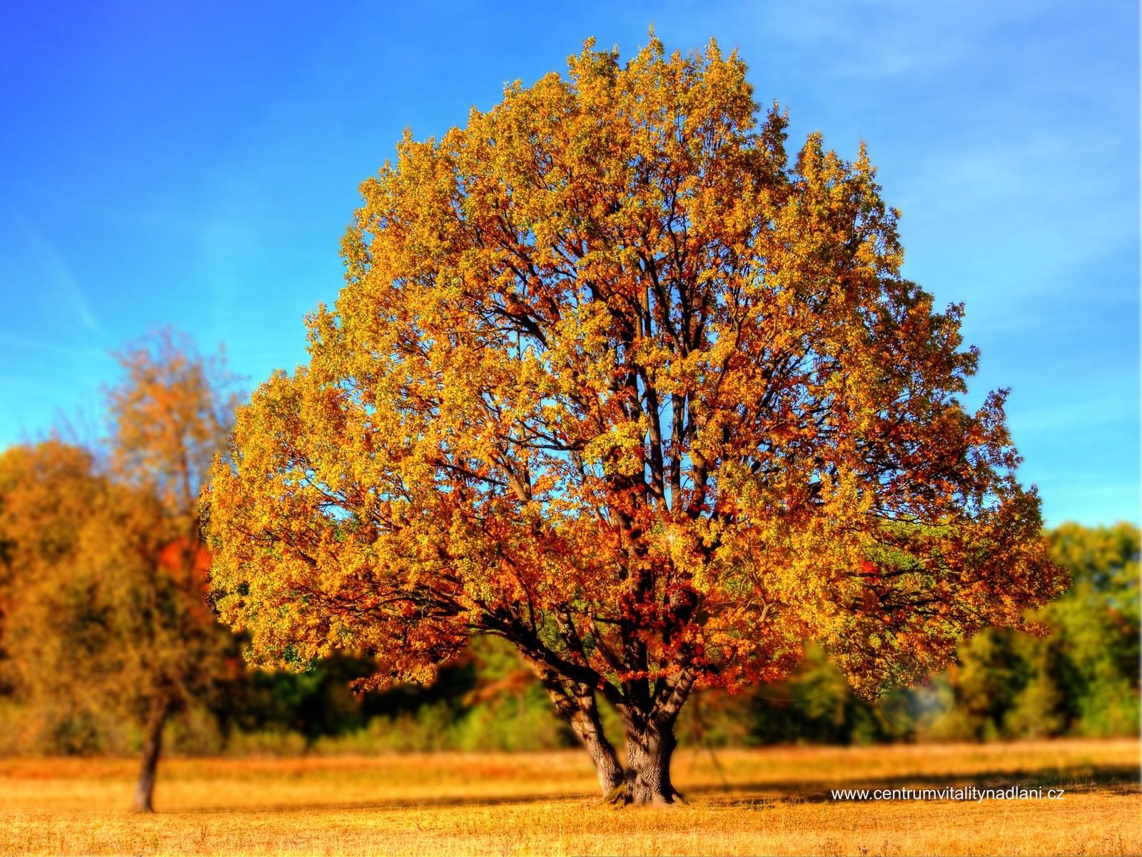Podzim_04.jpg