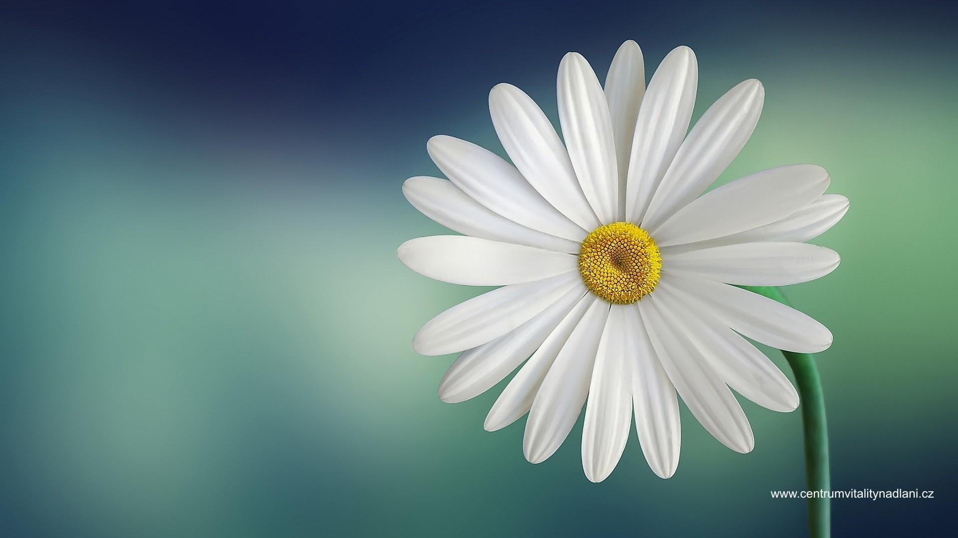 Kvetina_02.jpg
