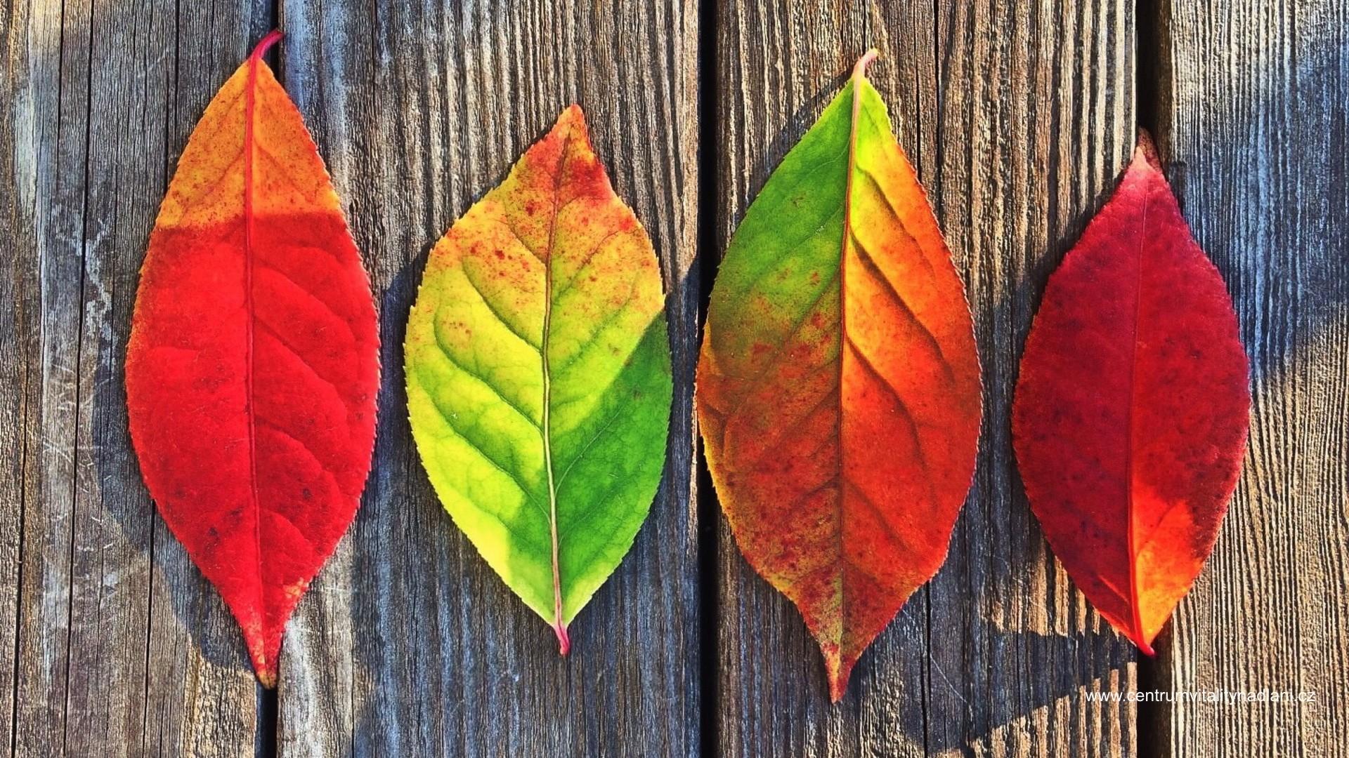 Podzim_02.jpg